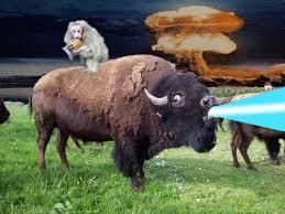monkey buffalo